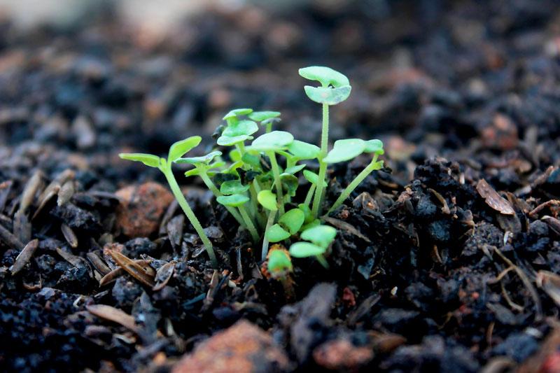 Odczyn gleby